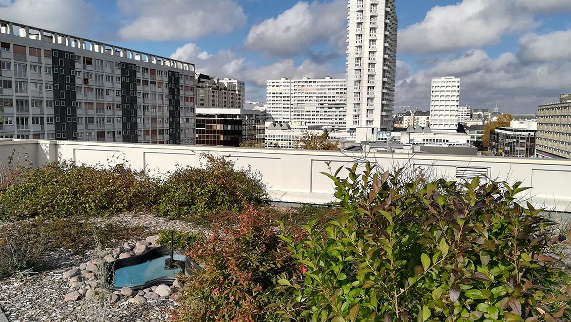 Toit végétalisé La Poste Colombier à Rennes